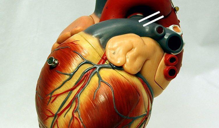 Corazón y embarazo