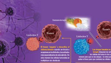 Inmunoterapia para tratar el cáncer