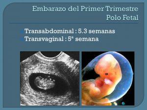 Transabdominal : 5.3 semanas. Transvaginal : 5ª semana.