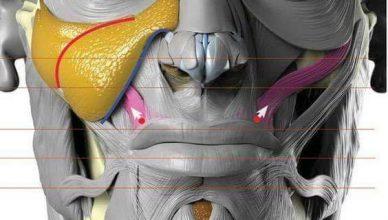Anatomia de los Músculos Faciales